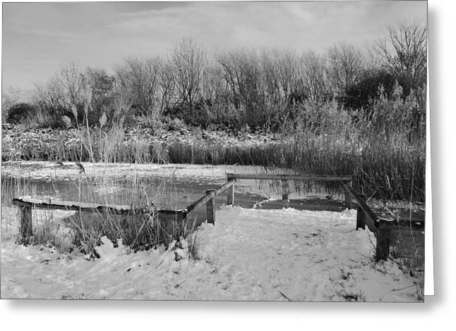 Marsh Scene Greeting Cards - Winter Sparkle Greeting Card by Terence Davis