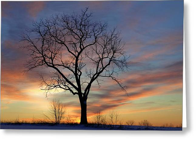 Incentive Greeting Cards - Winter Sunset Tree Greeting Card by John Stephens