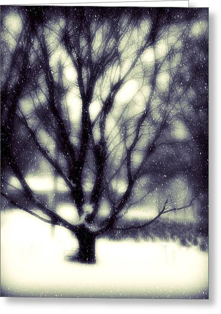 Winter White Fine Art Snow And Trees Greeting Cards - Winter Tree 3 Greeting Card by Perry Webster