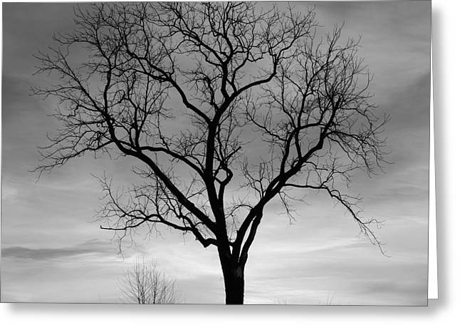 Gnarly Greeting Cards - Winter Tree Silhouette Greeting Card by John Stephens
