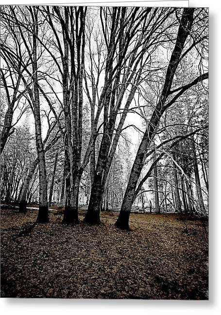 Winter Photos Greeting Cards - Winter Trees Greeting Card by Bonnie Bruno