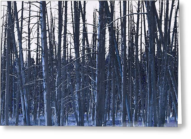 Winter Trees Greeting Card by Artist and Photographer Laura Wrede