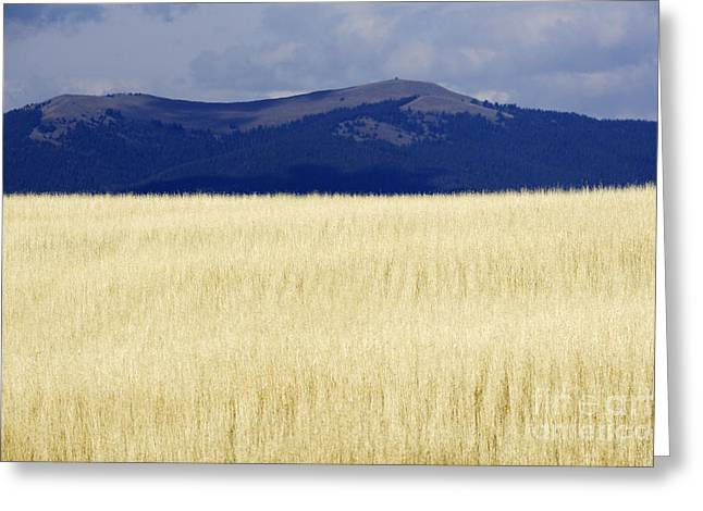 Winter Wheat Greeting Cards - Winter Wheat Greeting Card by Will & Deni McIntyre