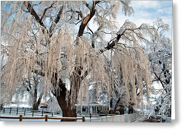 Winter Willow Greeting Card by Harry Strharsky