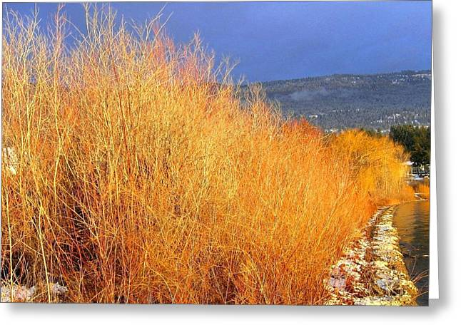 Willow Lake Greeting Cards - Winter Willows Greeting Card by Will Borden