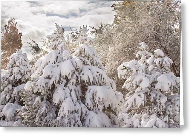 Winter Photos Greeting Cards - Winter Wonderland Greeting Card by James BO  Insogna