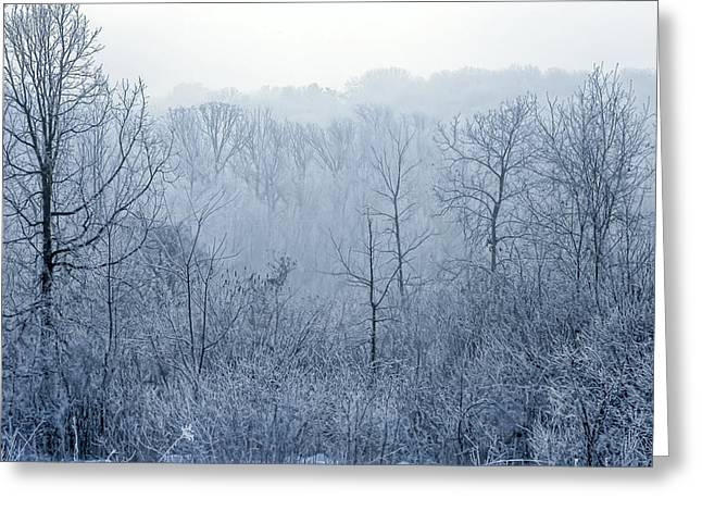 Christmas Greeting Greeting Cards - Winter Wonderland Greeting Card by Scott Norris