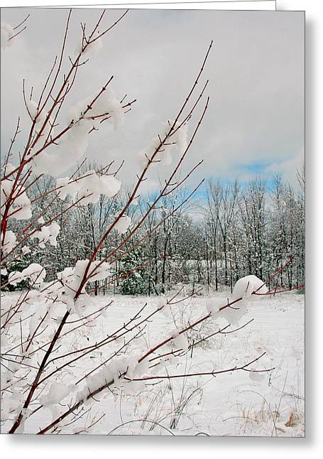 New England Snow Scene Greeting Cards - Winter Woods Greeting Card by Joann Vitali