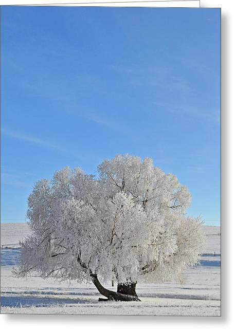 Winter's Coat In Montana's Gallatin Valley Greeting Card by Bruce Gourley