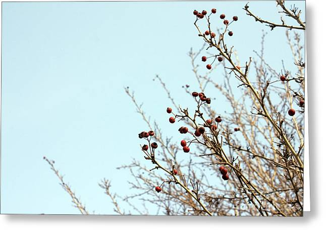 Berry Greeting Cards - Winters end Greeting Card by Cindy Garber Iverson