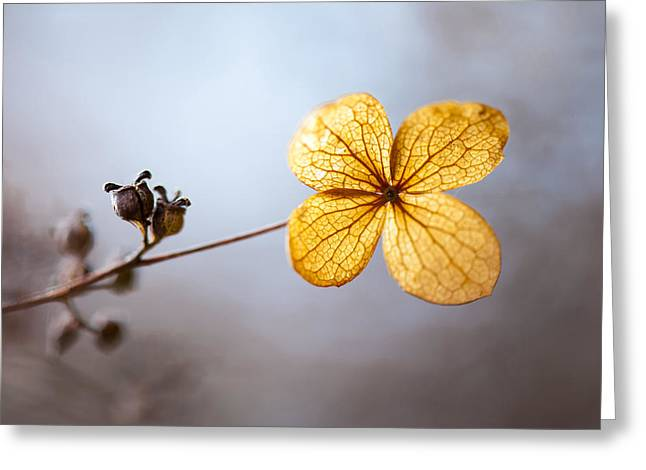 Translucence Greeting Cards - Winters Light Greeting Card by Steven Poulton