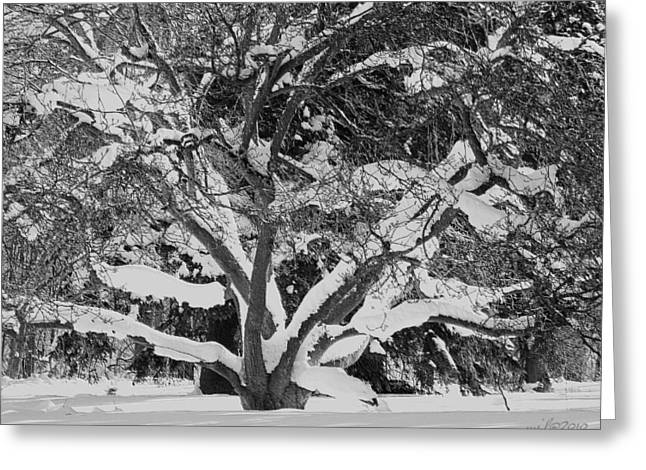 Snowy Night Night Greeting Cards - Winterscape After Snowy Night in London Greeting Card by Maciej Froncisz