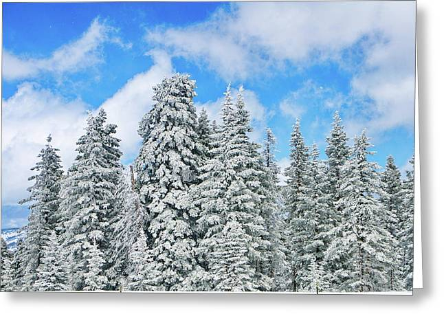 Forests Greeting Cards - Winterscape Greeting Card by Jeff Kolker