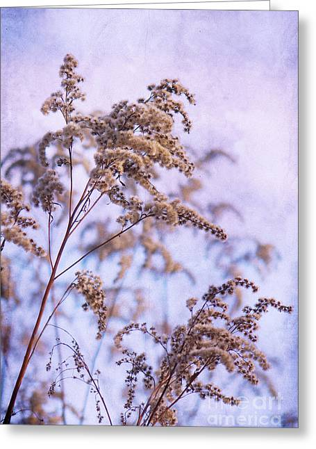 Himmel Mixed Media Greeting Cards - Wintertime Greeting Card by Angela Doelling AD DESIGN Photo and PhotoArt