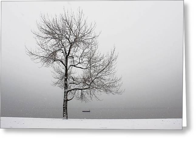 Tessin Greeting Cards - Wintertrees Greeting Card by Joana Kruse