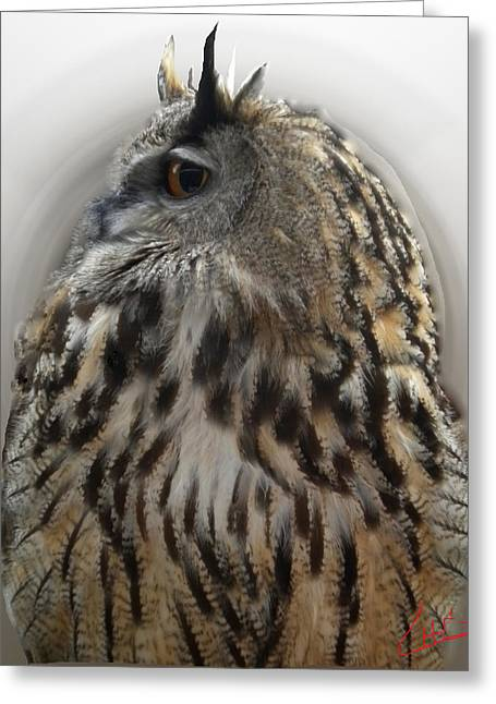 Colette Greeting Cards - Wise Forest Owl Alicante Region Spain Greeting Card by Colette V Hera  Guggenheim