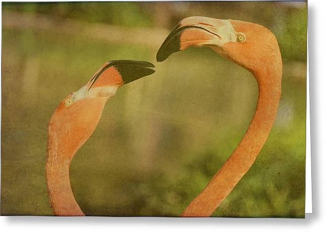 Soft Light Greeting Cards - Wish You Were Here Greeting Card by Jan Amiss Photography