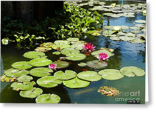 Wishes Greeting Cards - Wishes Among The Water Lilies Greeting Card by Methune Hively