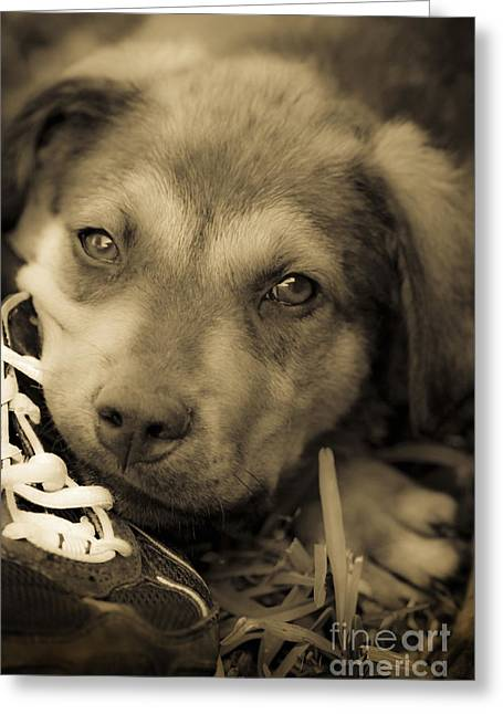 Puppies Mixed Media Greeting Cards - Wishing For New Sneakers Greeting Card by Kim Henderson