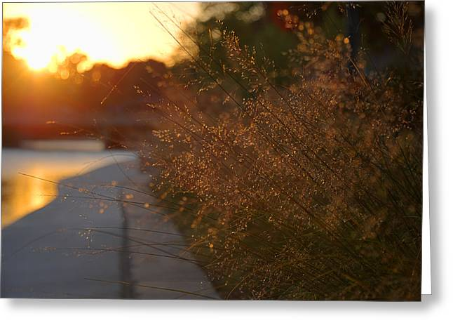 River Walk Greeting Cards - Wisp Greeting Card by Anthony Citro
