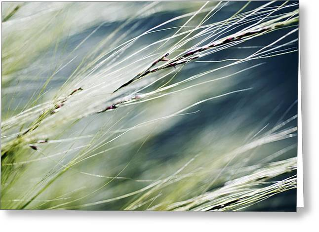 Weed Line Greeting Cards - Wispy Grass Greeting Card by Ray Laskowitz - Printscapes