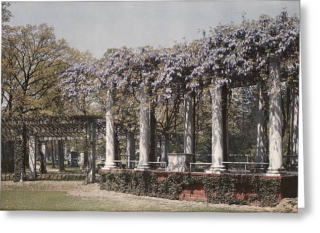 Arlington Photographs Greeting Cards - Wistaria On Old Amphitheater Greeting Card by Charles Martin