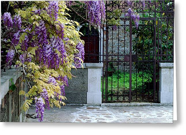 Wisteria In Bloom Greeting Cards - Wisteria and Gate in Venice Italy Greeting Card by Greg Matchick
