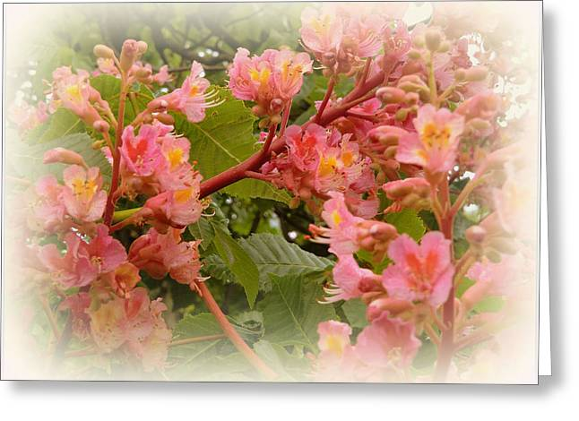Pink Flower Branch Digital Art Greeting Cards - Wisteria Flowers Greeting Card by Mindy Newman
