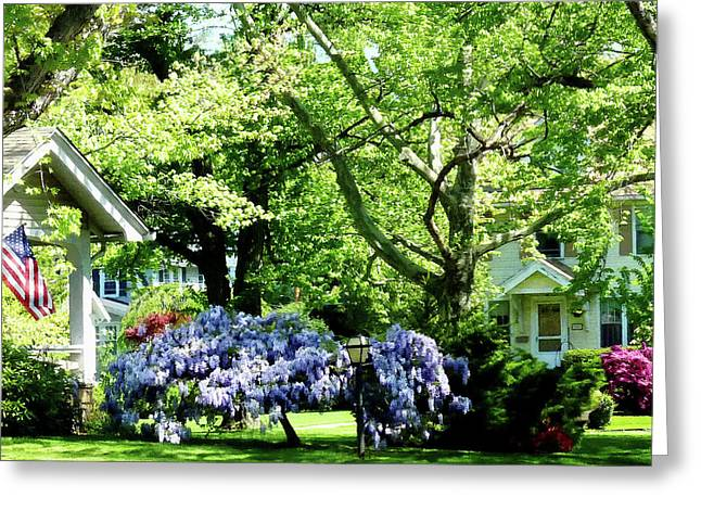 Flowering Tree Greeting Cards - Wisteria on Lawn Greeting Card by Susan Savad
