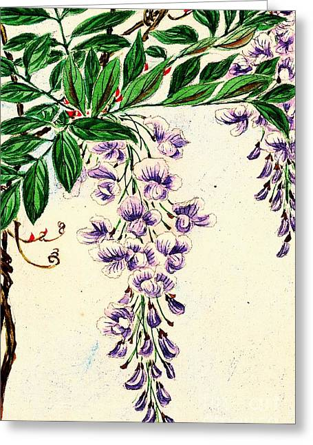 Wisteria Vine Blooms 1870 Greeting Card by Padre Art