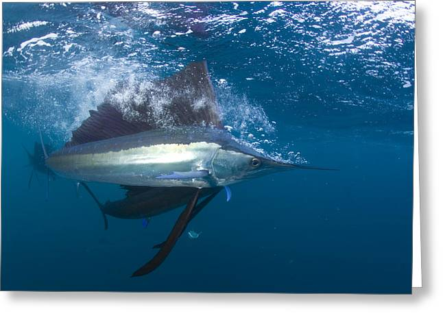 Isla Mujeres Greeting Cards - With Changeable Colors Flashing Greeting Card by Paul Nicklen