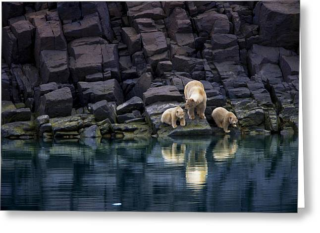 Wildlife Disasters Greeting Cards - Without Ice, A Mother Bear And Cubs Greeting Card by Paul Nicklen