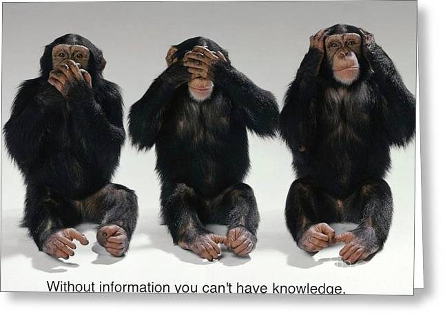 Chimpanzee Paintings Greeting Cards - Without Information You Cant Have Knowledge Greeting Card by Pg Reproductions