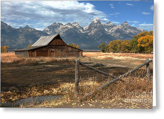 Grand Teton Photographs Greeting Cards - Withstanding The Test Of Time Greeting Card by Sandra Bronstein