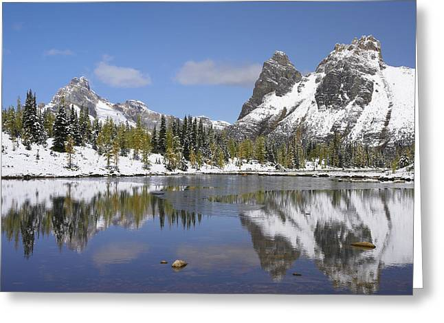 Wiwaxy Peaks And Cathedral Mountain Greeting Card by Tim Fitzharris