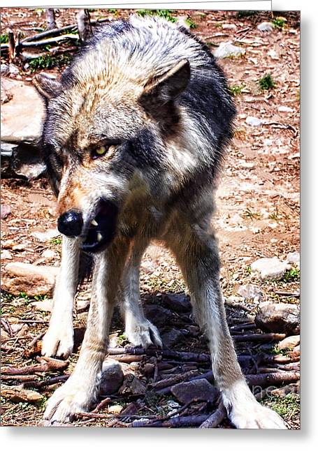 Growling Greeting Cards - Wolf Greeting Card by Anne Ferguson