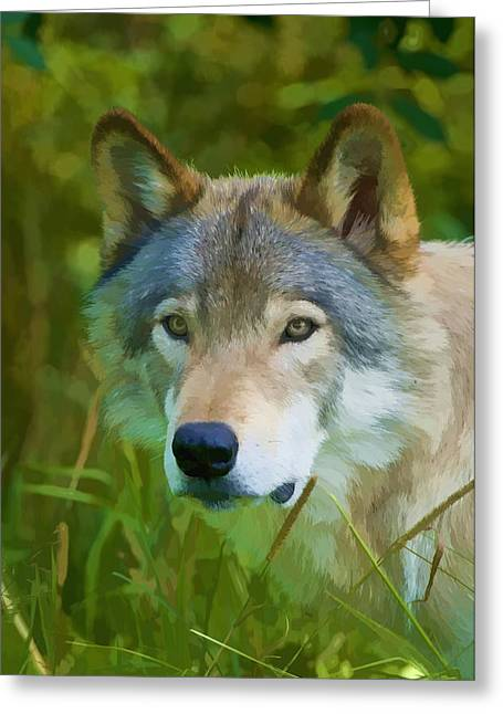 Wolves Greeting Cards - Wolf Portrait Greeting Card by Michael Cummings