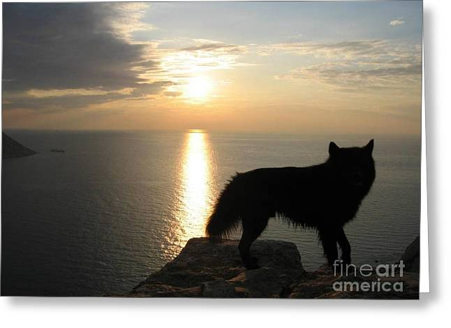 Sunset Prints Of Ireland Greeting Cards - Wolf Sunset Greeting Card by Paul Baker