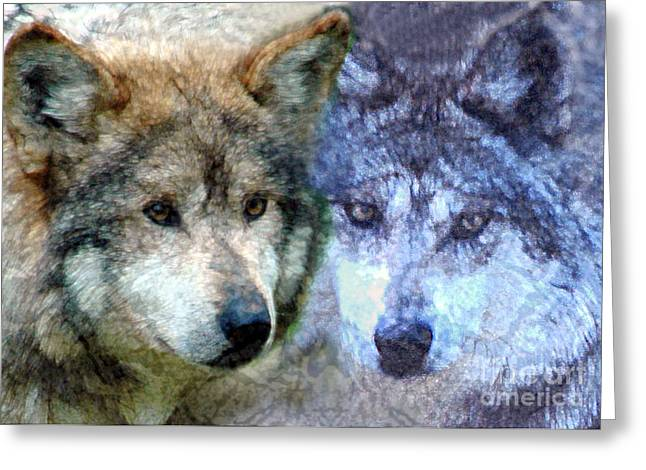 Tom Romeo Greeting Cards - Wolves Greeting Card by Tom Romeo
