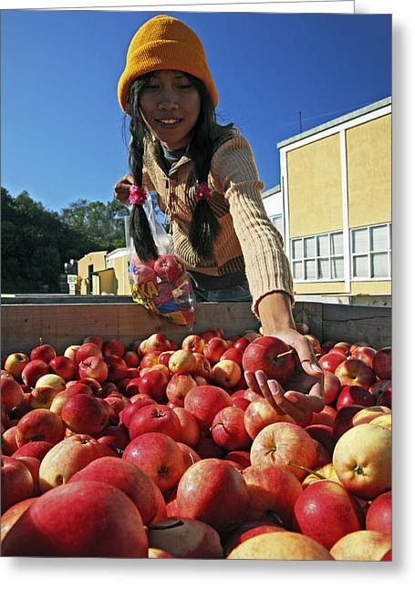 Purchasing Greeting Cards - Woman Collecting Apples Greeting Card by Bjorn Svensson