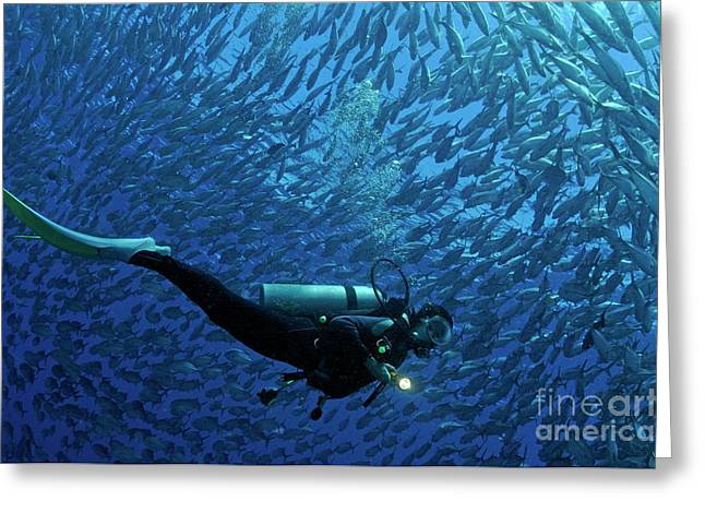 Women Only Greeting Cards - Woman diver surrounded by a school of Jackfish Greeting Card by Sami Sarkis