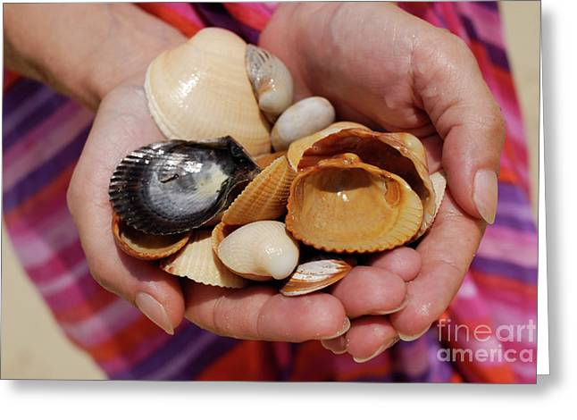 Women Only Greeting Cards - Woman holding shells Greeting Card by Sami Sarkis