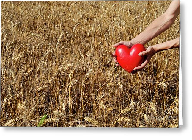 Only Mature Women Greeting Cards - Woman in wheat field holding heart shaped object Greeting Card by Sami Sarkis