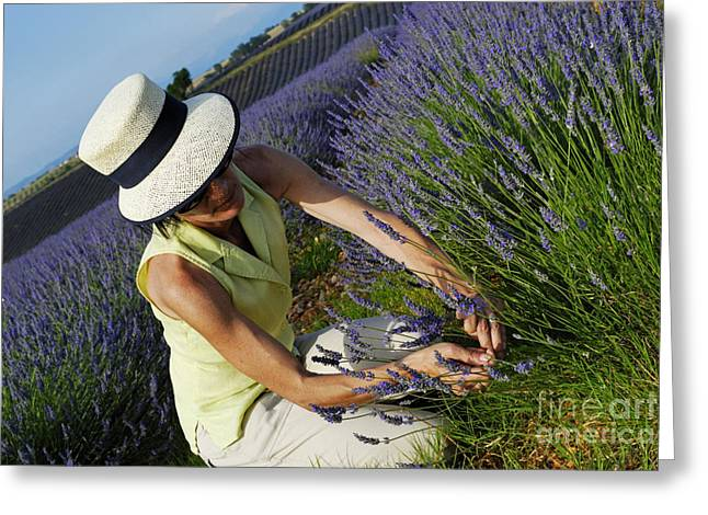 Women Only Greeting Cards - Woman picking up lavender flowers in field Greeting Card by Sami Sarkis