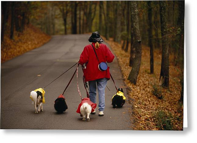 Caucasian Appearance Greeting Cards - Woman Walks Her Army Of Dogs Dressed Greeting Card by Raymond Gehman