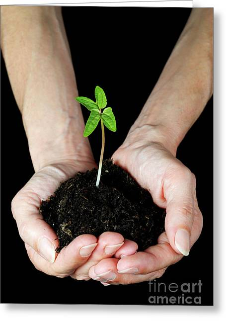 Compost Greeting Cards - Womans hands holding seedling Greeting Card by Sami Sarkis