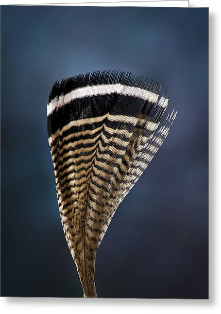 Jean Noren Greeting Cards - Wood Duck Feather Greeting Card by Jean Noren