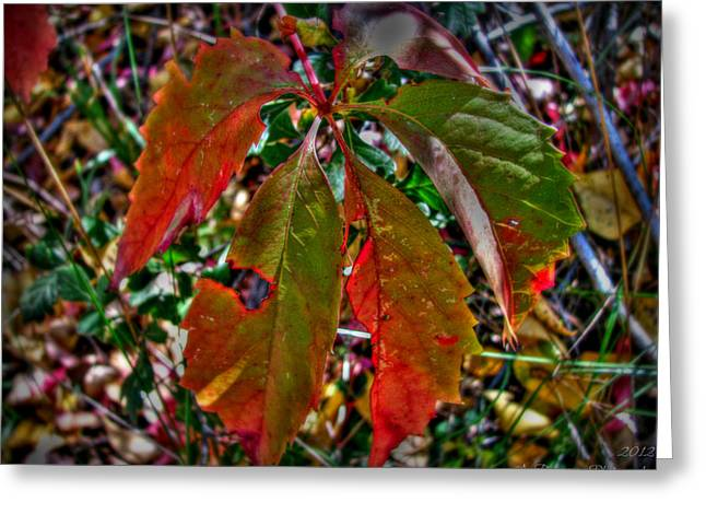 Prescott Greeting Cards - Woodbine Autumn Colors Greeting Card by Aaron Burrows