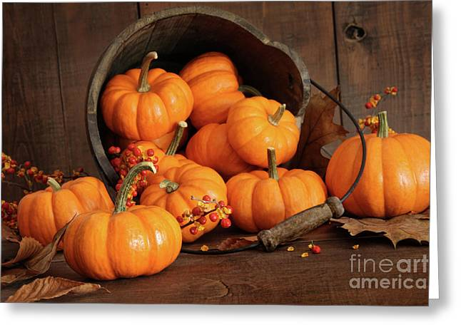 Pumpkins Greeting Cards - Wooden bucket filled with tiny pumpkins Greeting Card by Sandra Cunningham