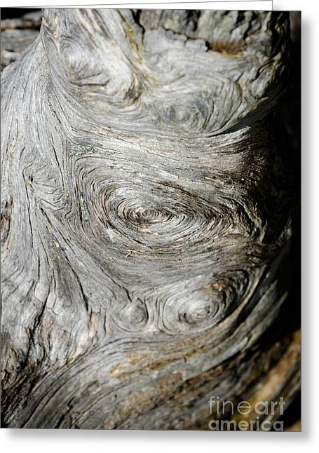 Wooden Fingerprint Eddies In The Grain Of An Old Log Like Whorls On A Finger Greeting Card by Andy Smy